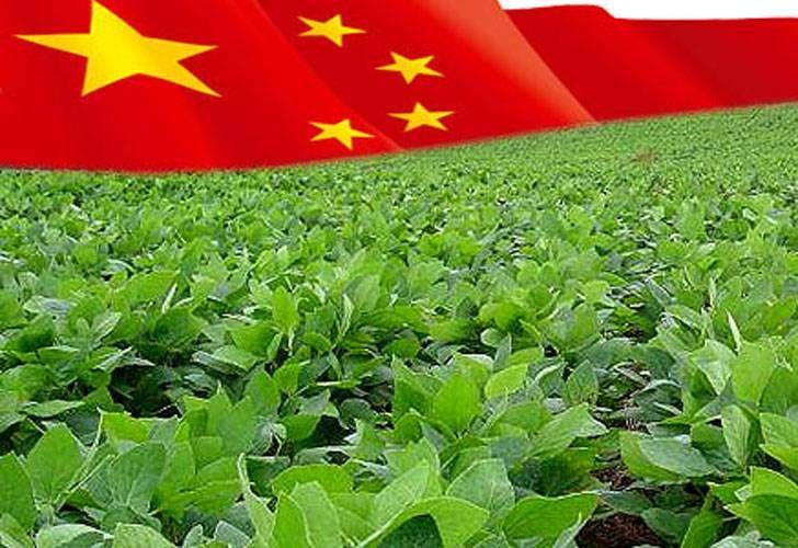 CHINA: Agricultura e Meio Ambiente